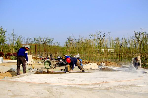 健康公园项目绿化种植效果初步显现