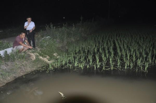 图为农技人员晚间深入稻虾养殖田块查看秧苗长势情况.JPG