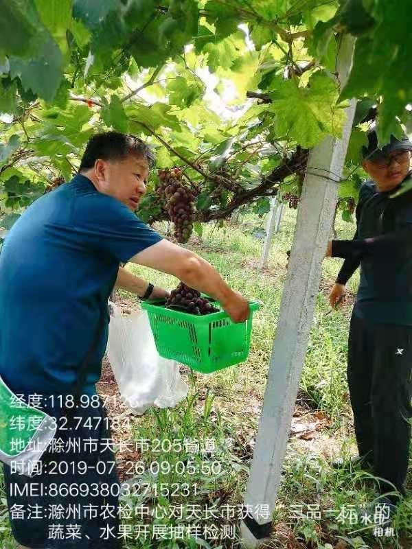 """滁州市农检中心来天长市开展安徽省""""三品一标""""农产品质量安全风险监测工作"""